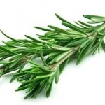zayıflatan bitki çayları isimleri